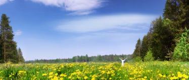Panorama van een tot bloei komende weide Stock Fotografie