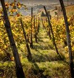 Panorama van een wijnstokkentak van Monferrato, Unesco-erfenis bij zonsondergang, Piemonte, Italië stock fotografie