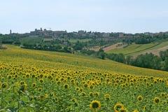 Panorama van Filottrano (Marsen) met zonnebloemen Stock Afbeeldingen