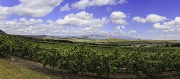 Panorama van Golanhoogten stock fotografie