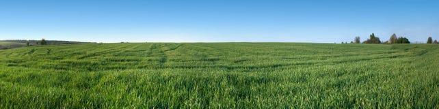 Panorama van Groen gebied met hemel stock afbeelding