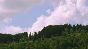 Panorama van groen hout op heuvel in de zomerdag Grote wolkenflarden in blauwe hemel nave Bomen stock videobeelden
