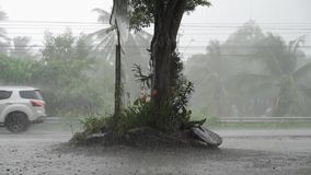 Panorama van groene wildernis tijdens tropische regen Groene wildernisbomen en palmen, mist en tropische regen Lege Schommeling stock video