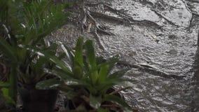 Panorama van groene wildernis tijdens tropische regen Groene wildernisbomen en palmen, mist en tropische regen Lege Schommeling stock videobeelden