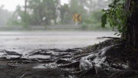 Panorama van groene wildernis tijdens tropische regen Groene wildernisbomen en palmen, mist en tropische regen Lege Schommeling stock footage
