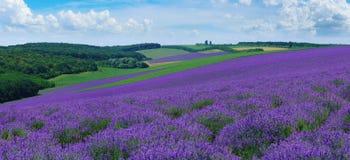 Panorama van het landschap van de zomerheuvels met bloeiende lavendelgebieden royalty-vrije stock fotografie