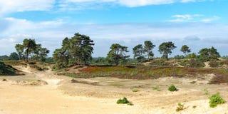 Panorama van het nationale park van Aekingerzand in Appelscha, het Net stock afbeeldingen