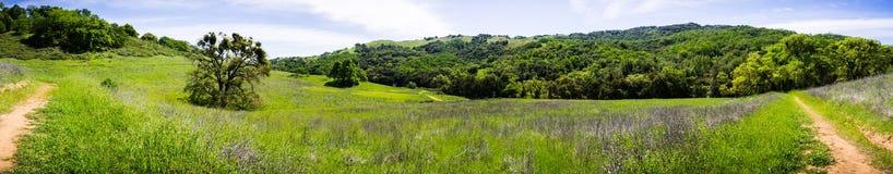 Panorama van heuvels en valleien van de onlangs geopende Rancho San Vicente Open Space Preserve, een deel van Calero-het Park van stock fotografie