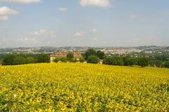 Panorama van Jesi (Marsen, Italië) en zonnebloemen Stock Afbeeldingen