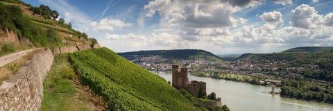 Panorama van kasteel Ehrenfels dichtbij Ruedesheim royalty-vrije stock foto's