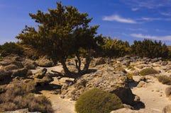 Panorama van Kedrodasos-strand, Eiland Kreta Stock Foto's
