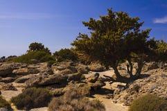 Panorama van Kedrodasos-strand, Eiland Kreta Royalty-vrije Stock Afbeelding