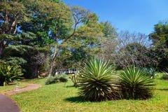 Panorama van Koninklijke Botanische Koning Gardens, Peradeniya, Sri Lanka Steeg, Meer en rivier Stock Fotografie