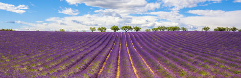 Panorama van Lavendelgebied Stock Fotografie