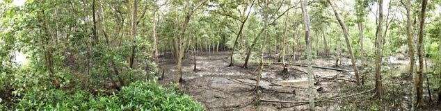 Panorama van mangrovebos at low tide Royalty-vrije Stock Afbeelding