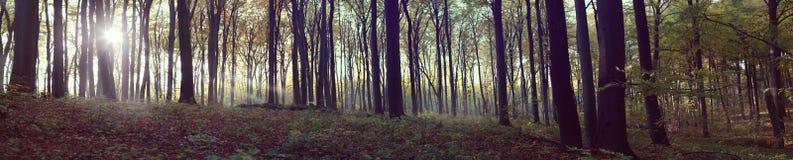 Panorama van mistig bos Royalty-vrije Stock Fotografie