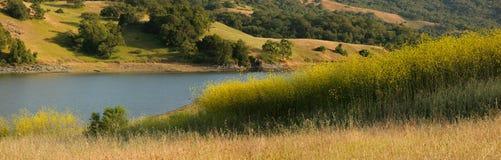 Panorama van mosterdgebied en eiken weide Royalty-vrije Stock Foto