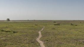 Panorama van Nationaal Parkmeer Manyara royalty-vrije stock afbeelding