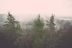 panorama van nevelig regenwoud - retro uitstekend effect Royalty-vrije Stock Afbeeldingen