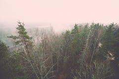 panorama van nevelig regenwoud - retro uitstekend effect Royalty-vrije Stock Fotografie