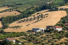 Panorama van olijfgaarden en landbouwbedrijven op rollende heuvels van Abruzzo stock afbeelding