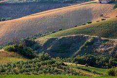 Panorama van olijfgaarden en landbouwbedrijven op rollende heuvels van Abruzzo stock afbeeldingen