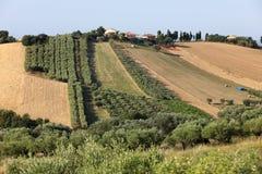 Panorama van olijfgaarden en landbouwbedrijven op rollende heuvels van Abruzzo stock foto