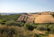 Panorama van olijfgaarden en landbouwbedrijven op rollende heuvels van Abruzzo stock foto's