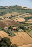 Panorama van olijfgaarden en landbouwbedrijven op rollende heuvels van Abruzzo stock fotografie