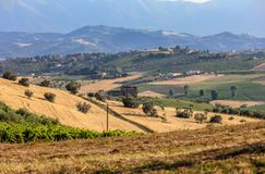 Panorama van olijfgaarden en landbouwbedrijven op rollende heuvels van Abruzzo royalty-vrije stock foto's