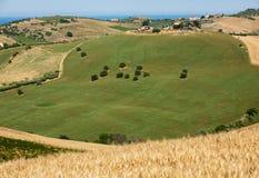 Panorama van olijfgaarden en landbouwbedrijven op rollende heuvels van Abruzzo en op de achtergrond het Adriatische Overzees royalty-vrije stock afbeeldingen