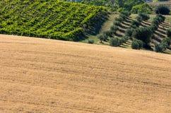 Panorama van olijfgaarden, wijngaarden en landbouwbedrijven royalty-vrije stock foto
