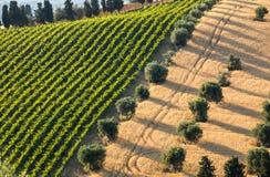 Panorama van olijfgaarden, wijngaarden en landbouwbedrijven op rollende heuvels van Abruzzo royalty-vrije stock foto