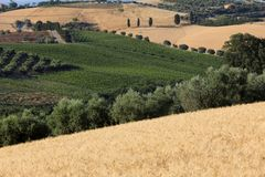 Panorama van olijfgaarden, wijngaarden en landbouwbedrijven op rollende heuvels van Abruzzo stock fotografie