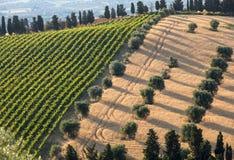 Panorama van olijfgaarden, wijngaarden en landbouwbedrijven op rollende heuvels van Abruzzo royalty-vrije stock fotografie