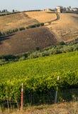 Panorama van olijfgaarden, wijngaarden en landbouwbedrijven op rollende heuvels van Abruzzo stock afbeeldingen