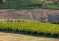 Panorama van olijfgaarden, wijngaarden en landbouwbedrijven op rollende heuvels van Abruzzo royalty-vrije stock afbeelding