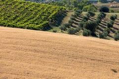 Panorama van olijfgaarden, wijngaarden en landbouwbedrijven op rollende heuvels van Abruzzo royalty-vrije stock afbeeldingen