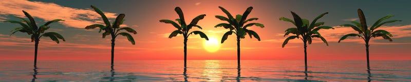 Panorama van overzeese zonsondergang, zonsopgang palmen Royalty-vrije Stock Afbeelding