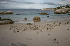 Panorama van pinguïnen na de visserij Stock Fotografie