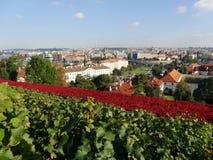 Panorama van Praag in de herfst Stock Afbeeldingen