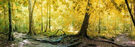 Panorama van regenwoud Stock Foto