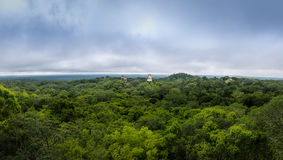 Panorama van regenwoud en bovenkant van mayan tempels bij het Nationale Park van Tikal - Guatemala Stock Foto