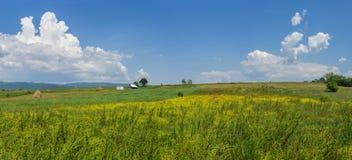 Panorama van Roemeens landbouwbedrijfgebied met bloemen Stock Afbeeldingen