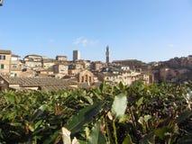 Panorama van Siena met de toren als Torre del Mangia wordt bekend die Toscanië, Italië Royalty-vrije Stock Foto