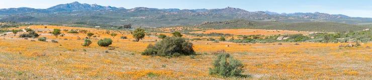Panorama van Skilpad in het Nationale Park van Namaqua stock afbeelding