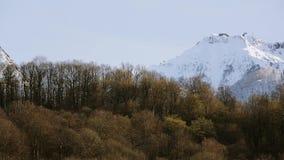 Panorama van sneeuwbergenpieken Bos bij voet van berg nave stock videobeelden