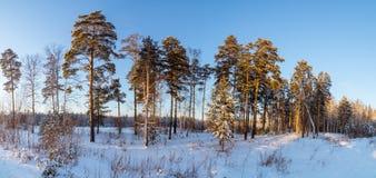 Panorama van sneeuwhout, weg, Rusland, Ural Stock Fotografie