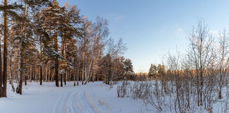 Panorama van sneeuwhout, weg, Rusland, Ural Royalty-vrije Stock Foto's