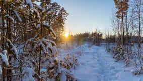 Panorama van sneeuwhout, weg, Rusland, Ural Royalty-vrije Stock Fotografie